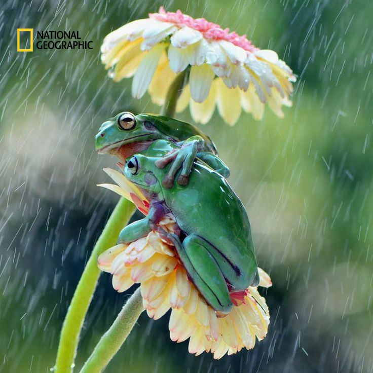 ۱۱ عکس برتر از حیوانات وحشی