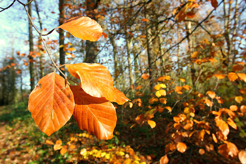 http://s8.picofile.com/file/8268220618/Autumn_leaves_and_trees.jpg