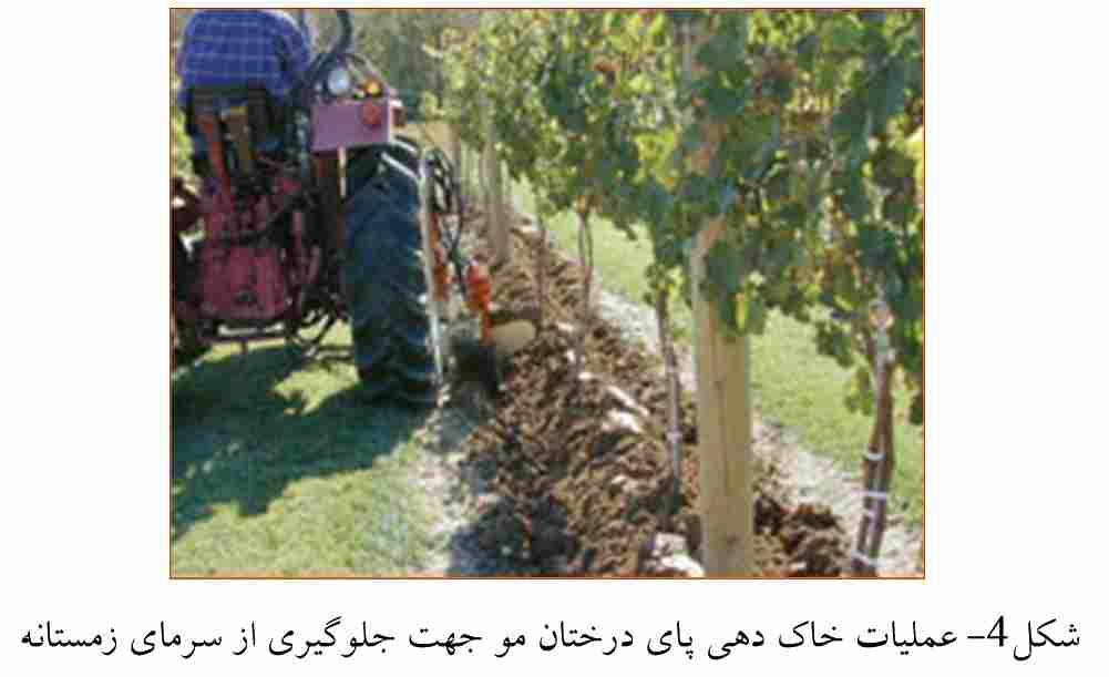خاک دادن پای درختان به منظور جلوگیری از سرما زدگی