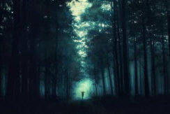 عکس عاشقانه در جنگل