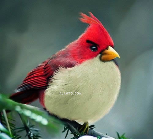 http://s8.picofile.com/file/8269575576/angry_birds_1.jpg