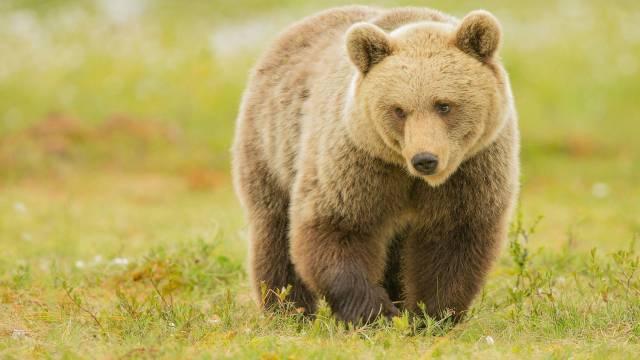 تصاویر خرس