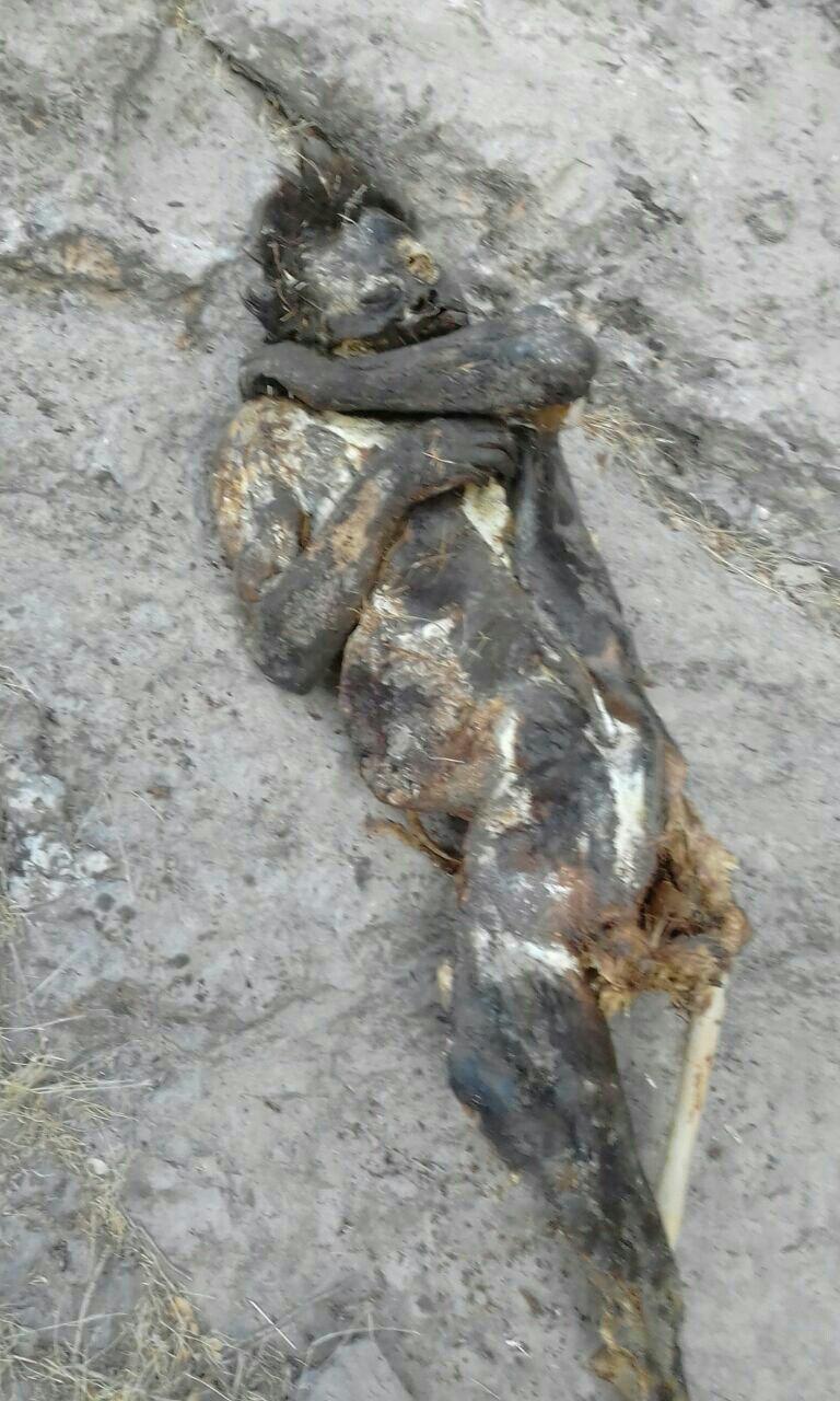 جسد مجهول الهویه در یاسوج