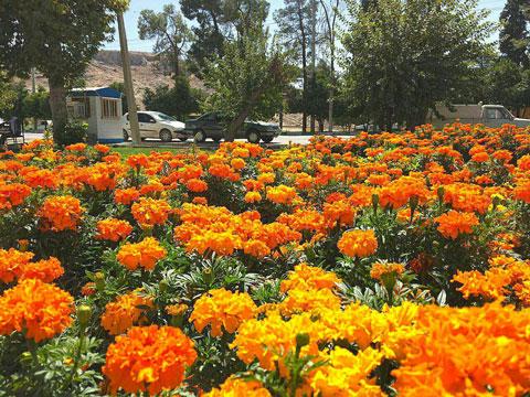 فضای سبز شهر نورآباد
