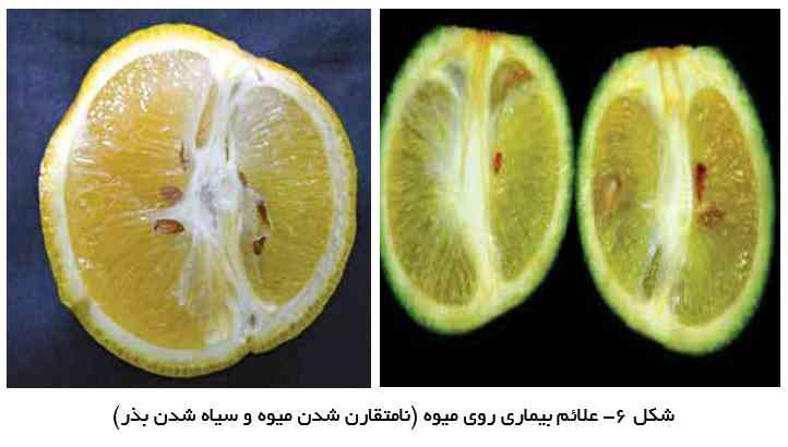 علایم گرینینگ روی میوه