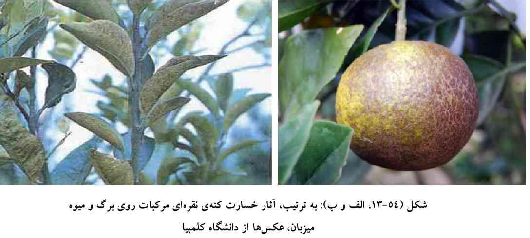 علایم خسارت کنه نقره ای مرکبات روی برگ و میوه