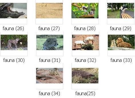 http://s8.picofile.com/file/8272008418/pic_fauna_03.JPG