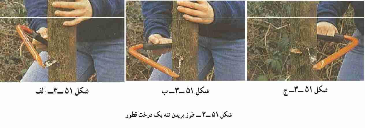 طرز بریدن تنه یک درخت قطور