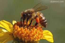 ایده نو  در پرورش زنبور عسل