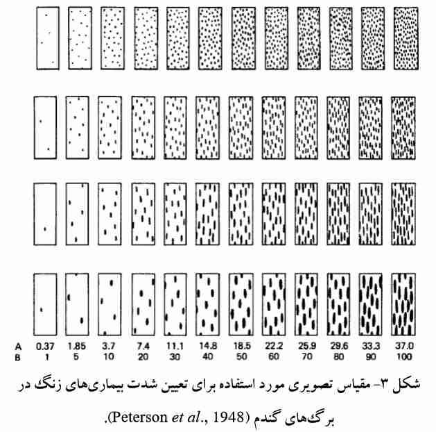 مقیاس تصویری برای تعیین شدت بیماری زنگ