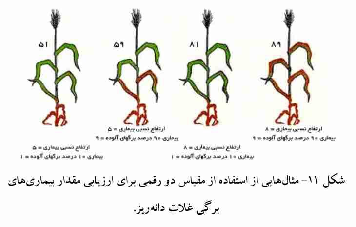 مقیاس دو رقمی برای ارزیابی بیماریهای برگی علات دانه ریز