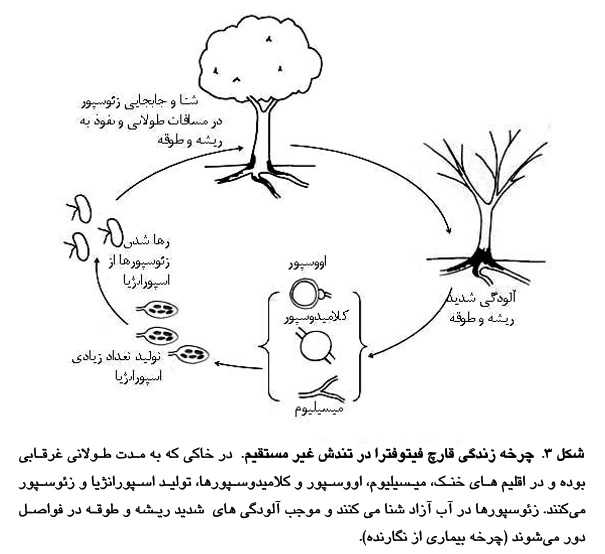 چرخه زندگی قارچ فیتوفترا در تنش غیر مستقیم