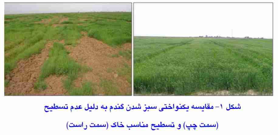 مقایسه سبز شدن یکنواخت گندم در زمین تسطیح شده و تسطیح نشده