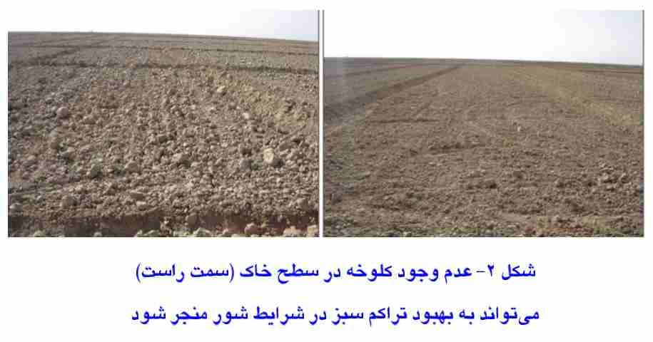سبز بهتر گندم در زمین بدون کلوخه نسبت به زمین کلوخه دار