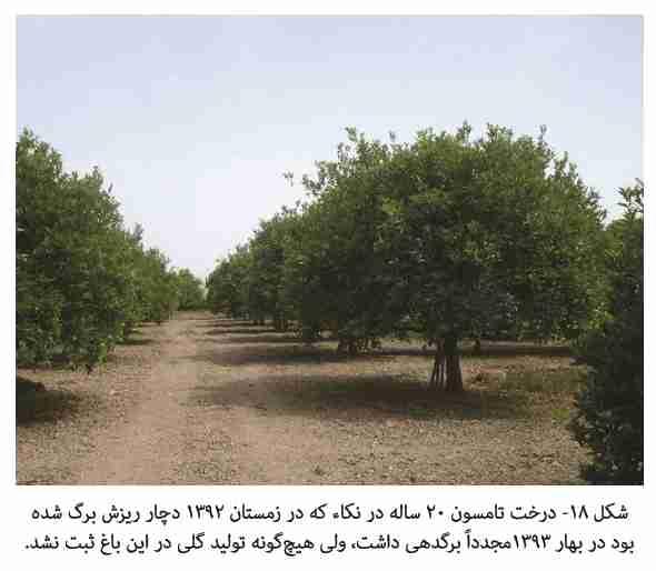 عدم گلدهی در درختان پس از تنش یخبندان