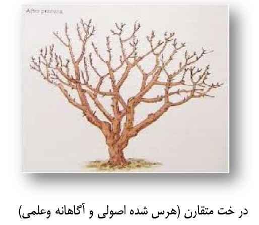 توجه به تقارن و شاخه زنی درختان