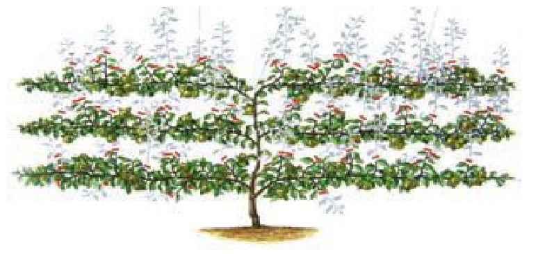 فرمهای تربیت درختان