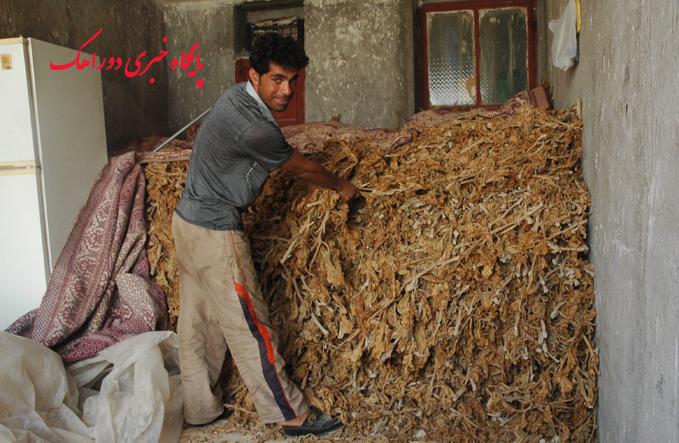 جمع آوری و فراوری تنباکو