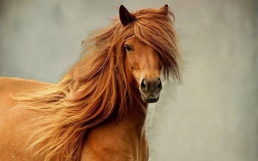 اسب...