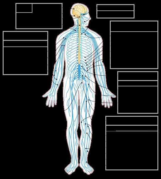 دستگاه عصبی مرکزی