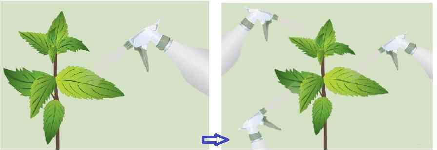 استفاده از روغن برای ساخت آفتکش ارگانیک