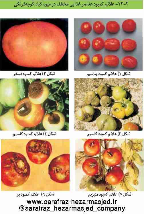 علایم کمبود عناصر غذایی روی میوه گوجه فرنگی