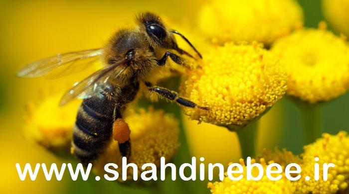 گرده زنبور عسل