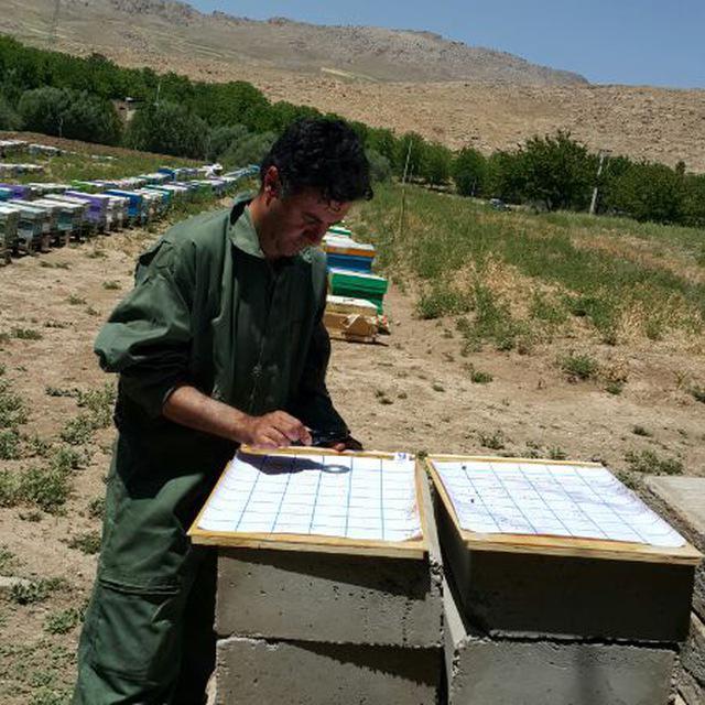 دکتر کامیار احمدی