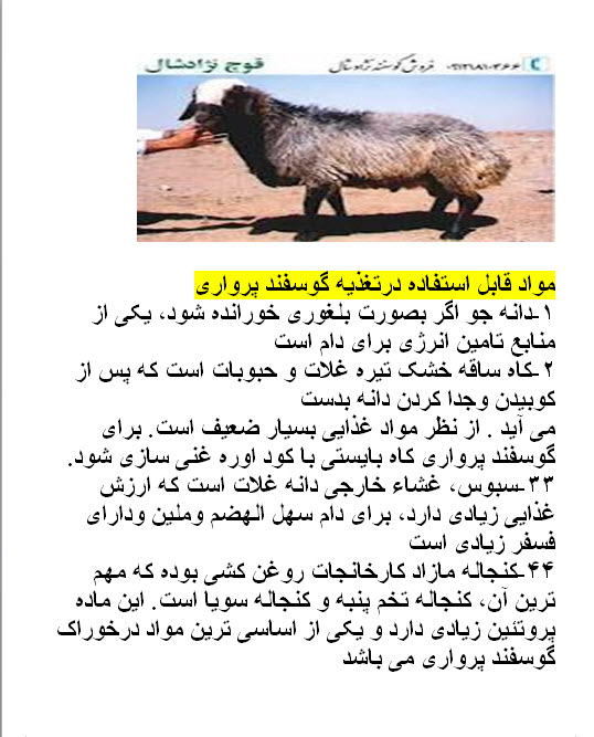 دانلود طرح توجیهی پرواربندی بره word ، طرح توجیهی پرواربندی بره گوسفند ، دانلود رایگان طرح توجیهی پرواربندی بره