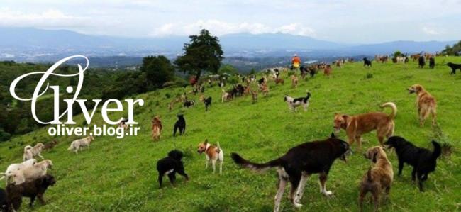 بهشت سگها در کاستاریکا