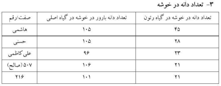 مقایسه تعداد دانه در خوشه در تون و گیاه اصلی