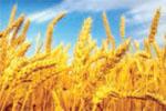 محصولات کشاورزی، از تولید تا مصرف