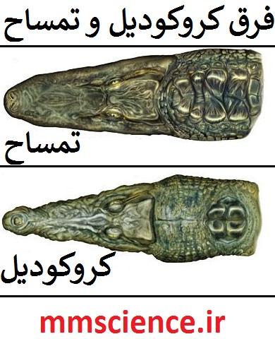 تفاوت تمساح و کروکودیل