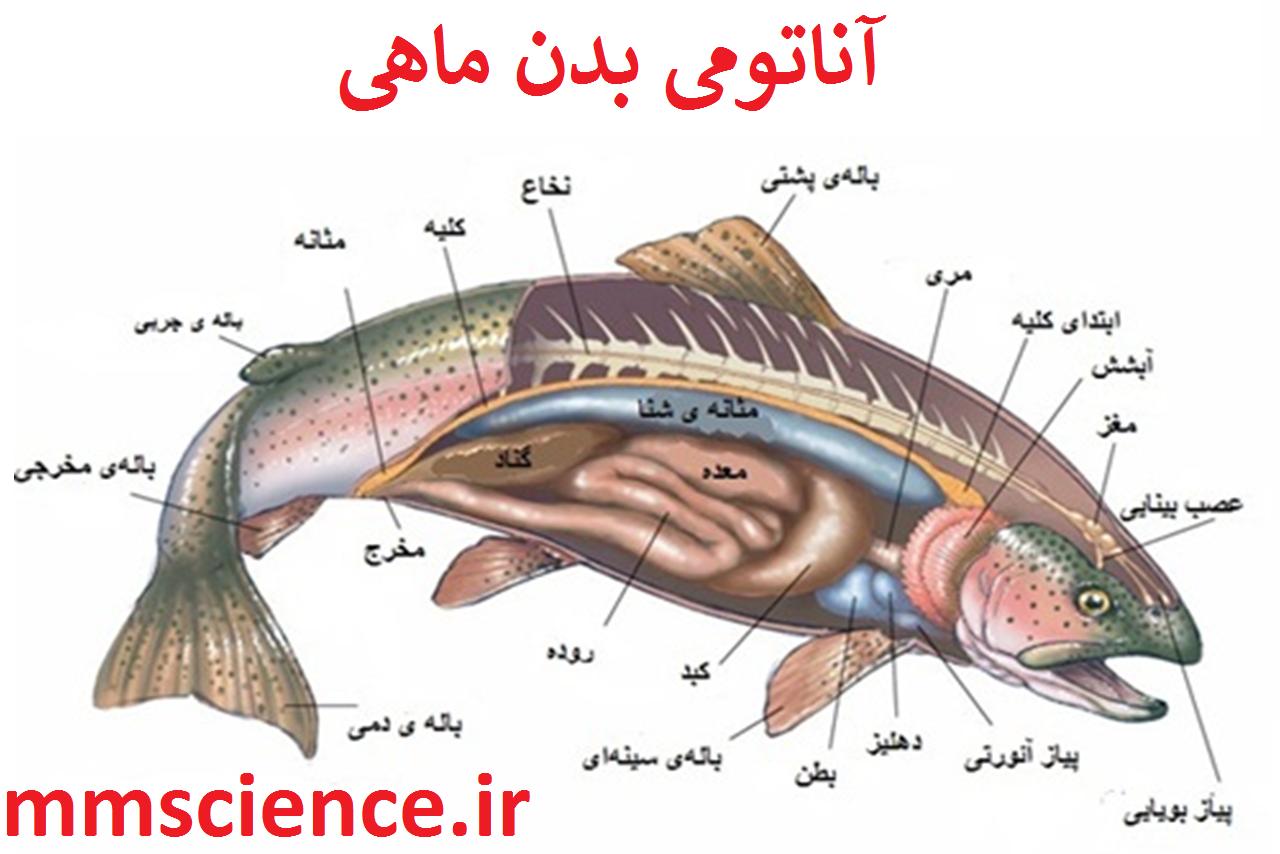 آناتومی ماهی ها
