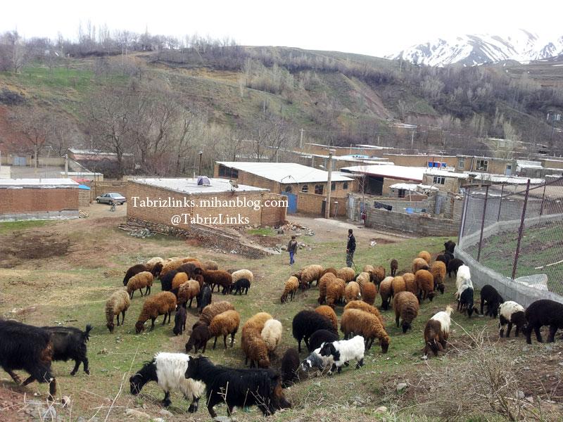آذربایجانگردی