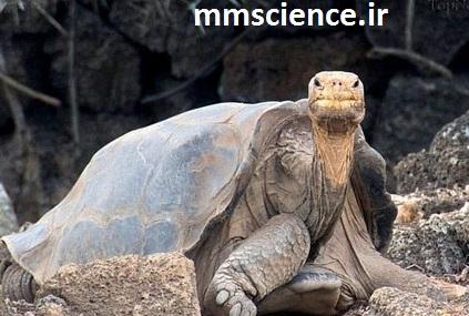 پیر ترین لاکپشت جهان