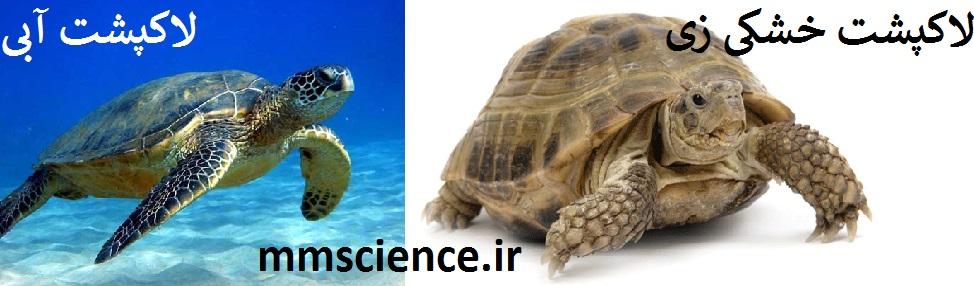 لاکپشت خشکی زی و لاکپشت دریایی