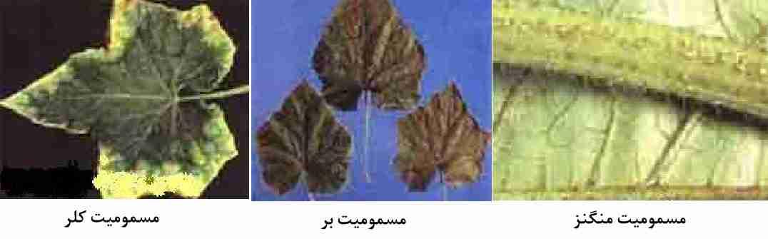 مسمومیت کلر - بر و منگنز در سبزی و صیفی جات