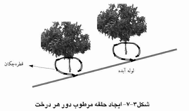 ایجاد حلقه مرطوب دور هر درخت