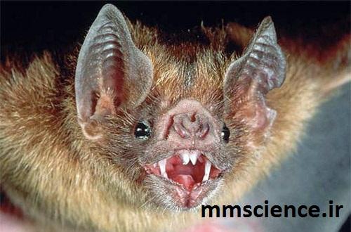 خفاش خون آشام
