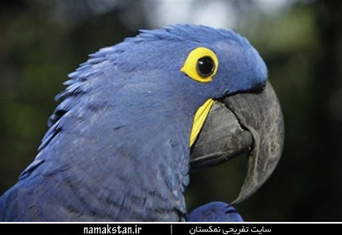 [عکس: photos_strange_birds_6.jpg]