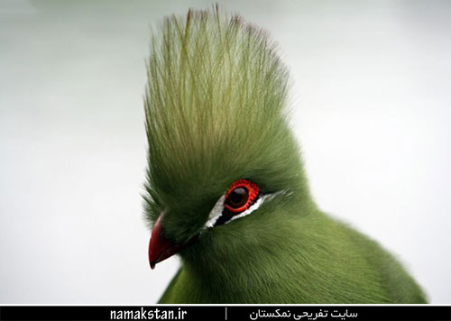 [عکس: photos_strange_birds_12.jpg]