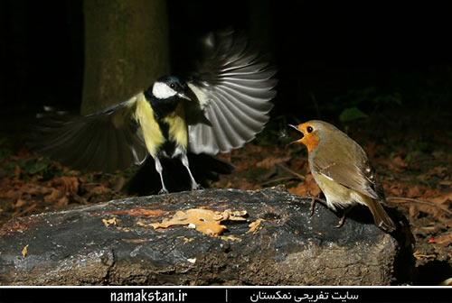 [عکس: zombie_wild_bird_photos.jpg]