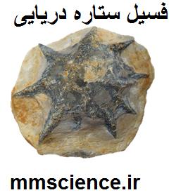 فسیل ستاره دریایی