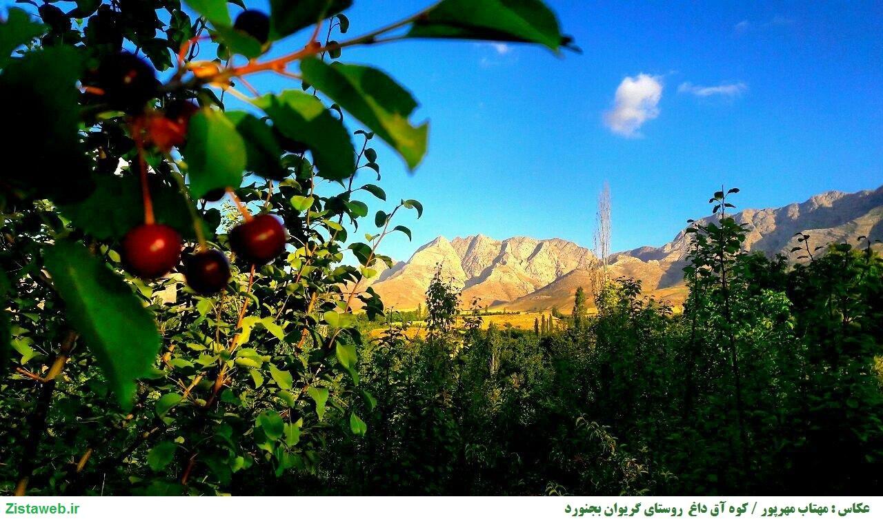 عکس زیبای کوه آق داغ در روستای گریوان شهر بجنورد /عکاس خانم مهتاب مهرپور