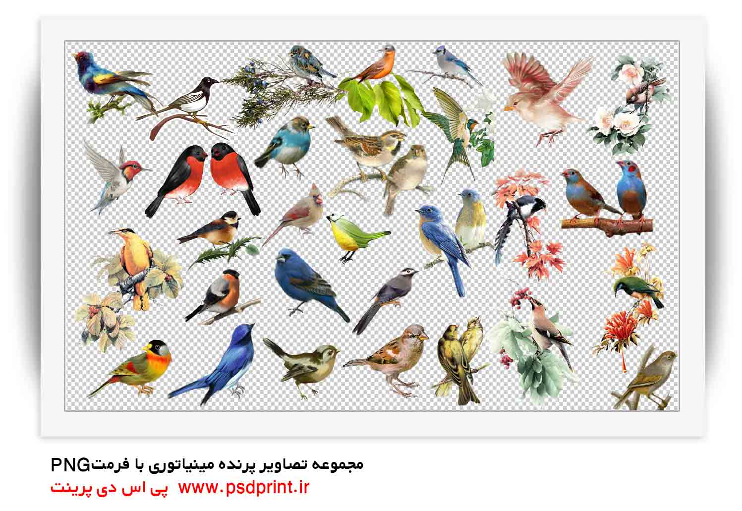 پرنده شیک طراحی png