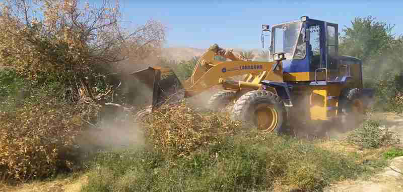 ریشه کنی درختان آلوده به بیماری جاروک