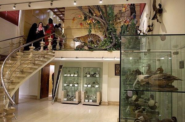 ردپای دایناسور در تهران!