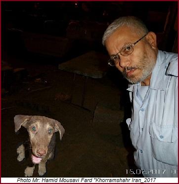 داستان کوتاه:توله سگ