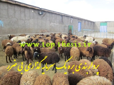 سود پرواربندی بره و گوسفند